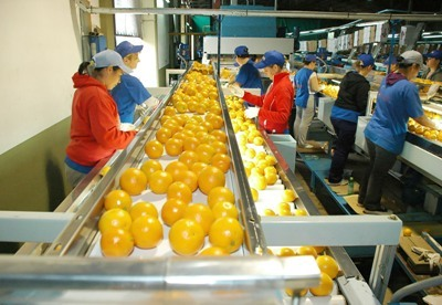 F brica de jugos m s de 300 productores en cooperativa for Fabrica de aberturas de pvc en rosario