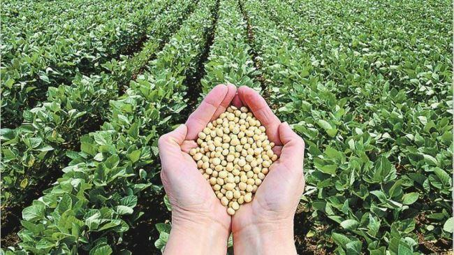 El Gobierno otorga $1000 millones en subsidios a productores de soja del NOA