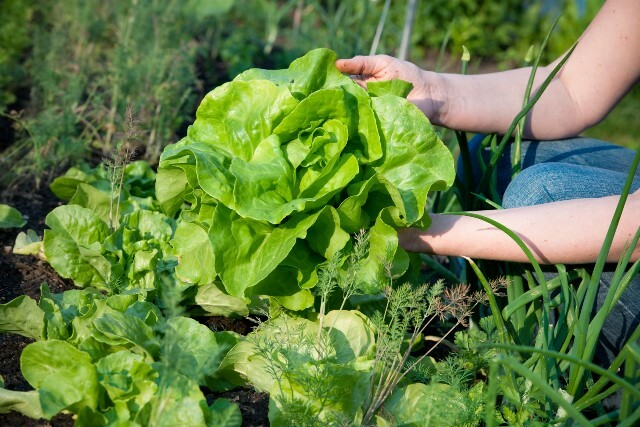 Capacitarán a profesionales sobre agroecología y producción orgánica