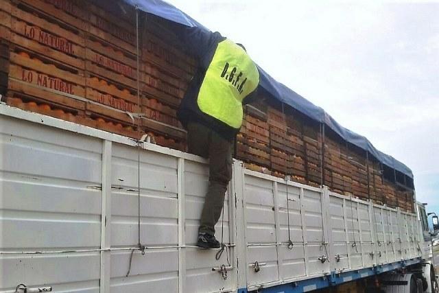 El Gobierno realiza rigurosos controles al transporte de citrus
