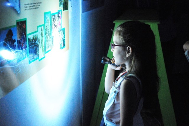 En febrero vuelve La Noche de las Linternas en el Museo Antonio Serrano