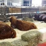 Empezó la Semana de las Carnes en La Rural